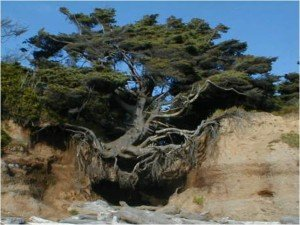 resilience-arbre